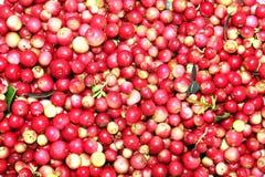 Cranberries Zdjęcia Royalty Free