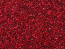 cranberries Arkivbilder