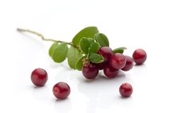 Cranberries. Bunch of fresh cranberries isolated on white Stock Photo