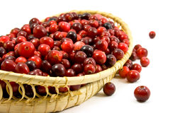 cranberries arkivfoton