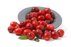 Free Cranberries Royalty Free Stock Photo - 7340465