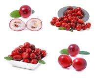 Free Cranberries Stock Photos - 7935263