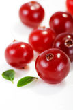 Cranberries. On the white background Stock Photos