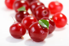 Cranberries. On the white background Royalty Free Stock Images