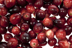 Cranberries From Above royalty free stock photography