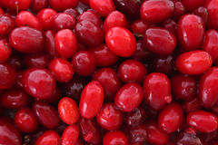 Cranberries background Stock Photography