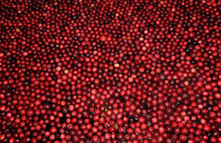 Cranberries for background Stock Photos