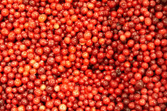 Cranberries background. Ripe fresh red cranberries background Royalty Free Stock Photography