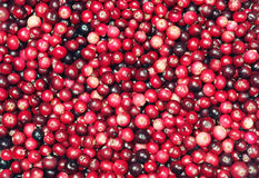 Cranberries background Royalty Free Stock Images