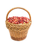 Cranberries in the basket. Cranberries in a basket on a white background closeup Stock Image