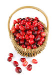 Cranberries in a basket Stock Photography