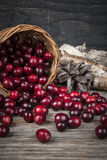 Cranberries in basket Stock Image