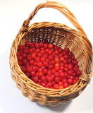 cranberries in basket Royalty Free Stock Photo