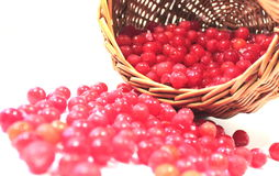 Cranberries in basket Stock Photos