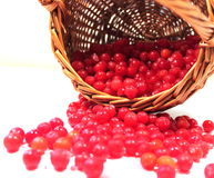 cranberries in basket Royalty Free Stock Photography