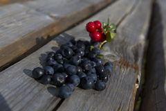 Cranberries and blueberries Stock Photo