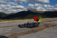 Cranberries and blueberries Royalty Free Stock Photography