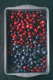 Cranberries and blueberries Royalty Free Stock Image