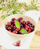 Cranberries in bowl Royalty Free Stock Photography