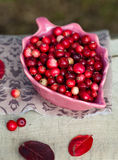 Cranberries in a bowl. On the fabric Stock Images
