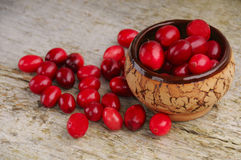 Cranberries in bowl Stock Images