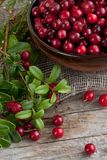 Cranberries in a bowl. On a wooden table royalty free stock photos
