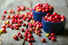 Cranberries. Bright red cranberries in a beautiful blue bowl on a wooden table, close-up royalty free stock photo