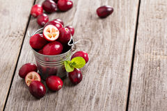 Cranberries in a bucket Stock Photography