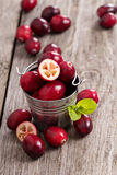 Cranberries in a bucket Royalty Free Stock Photos