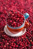 Cranberries in a ceramic mug Royalty Free Stock Image