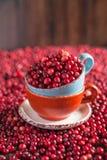 Cranberries in a ceramic mug Stock Image
