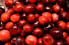 Cranberries close-up Stock Image