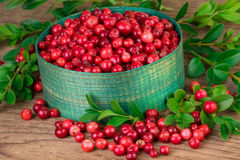 Cranberries close-up. Green basket with fresh cranberries lingonberries on wooden background Stock Images