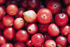 Cranberries, close up view... Royalty Free Stock Photography