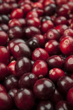 Cranberries closeup Stock Images