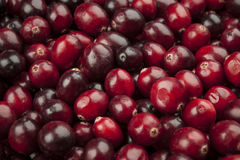 Cranberries closeup Stock Photography