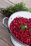 Cranberries in a colander Stock Images