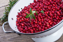 Cranberries in a colander Stock Photography