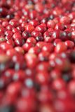 Cranberries everywhere! royalty free stock photo