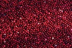 cranberries field flottörhus Royaltyfri Foto