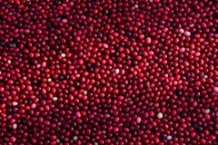 Cranberries floating in field. Closeup of cranberries floating in the field royalty free stock photo