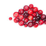 Cranberries fruits close-up. Red ripe detailed Stock Image
