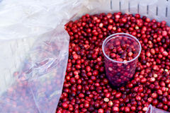 Cranberries with a glass Stock Images
