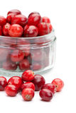 Cranberries in a glass bowl, closeup shot Stock Image
