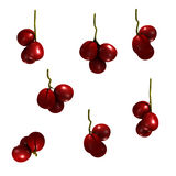Cranberries Group Royalty Free Stock Photography