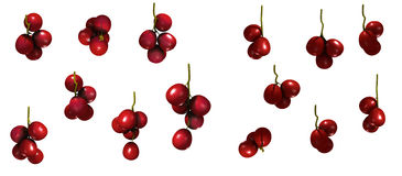 Cranberries Group Stock Photography
