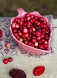 Cranberries i en bunke Arkivbilder