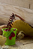 Cranberries i pieczarki Zdjęcie Royalty Free