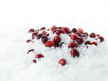 Cranberries On Ice II Royalty Free Stock Image
