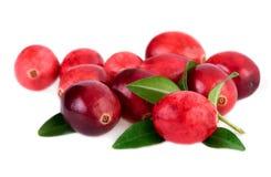 cranberries isolerade Röd tranbär med bladet som isoleras på vit bakgrund Fotografering för Bildbyråer